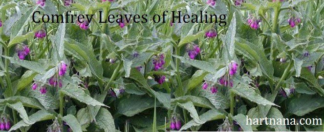 comfrey plant banner